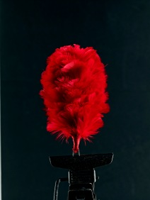 Red hackle, worn exclusively by The Black Watch.